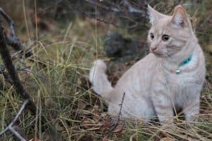 cat sitting hay