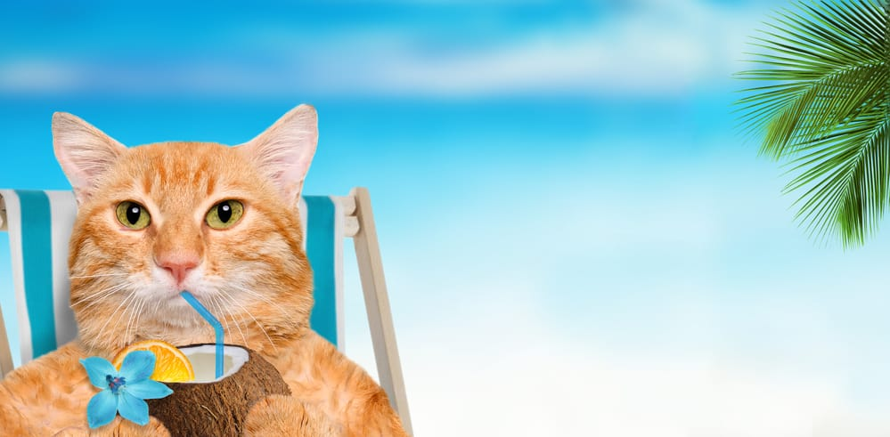 cat drinking coconut
