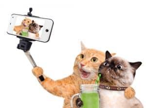 2 cats selfie