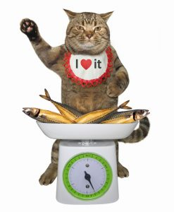 cat selling fish