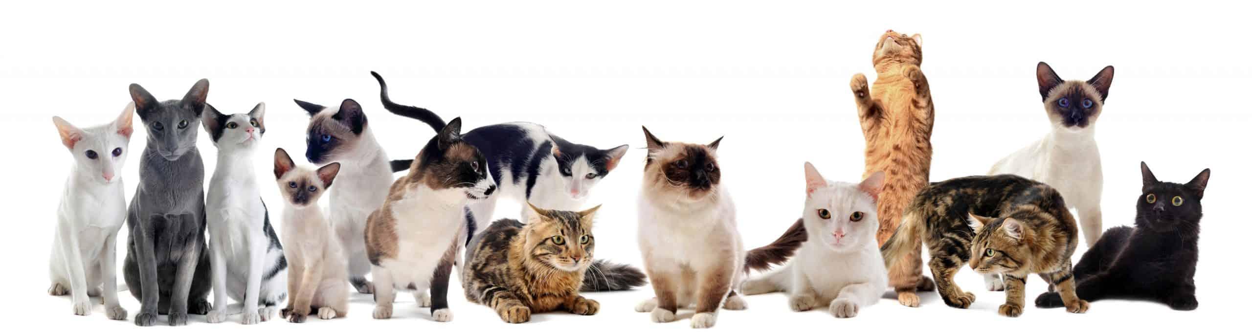 best cat tracker