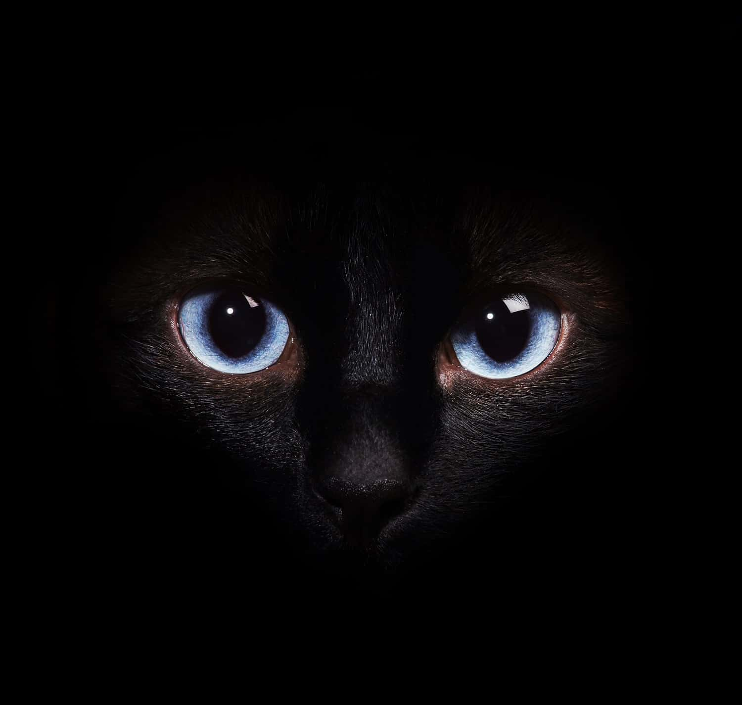 siamese eyes