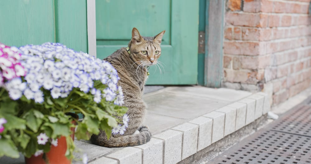 Street cat at outdoor