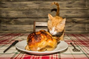 turkey and cat