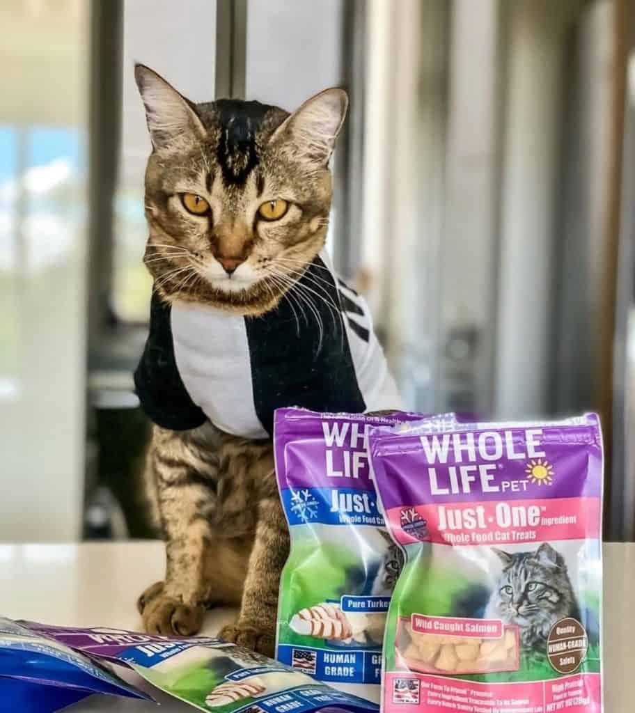 best cat treats