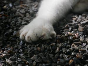 6 toed cat