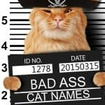 200+ Badass Cat Names: From the Tough to the Mean And Downright Evil
