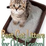The Best Cat Litters for Odor Control [year]