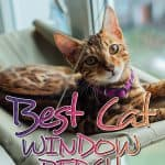 The Best Cat Window Perch of 2021: Exclusive for Felines Who Love Comfort