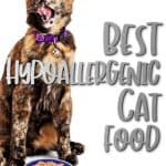Best Hypoallergenic Cat Food: 2021 Buyer's Guide & Reviews