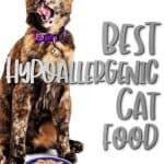 Best Hypoallergenic Cat Food: [year] Buyer's Guide & Reviews