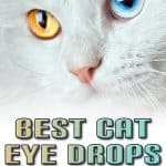 Buying Guide and Reviews of the 5 Best Cat Eye Drops in 2020
