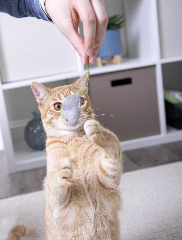 cat chew toys