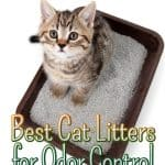 The Best Cat Litters for Odor Control [2020]