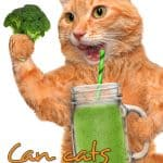 Can Cats Eat Broccoli? Is It Harmful or Beneficial?