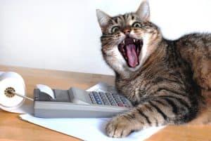 calculator cat