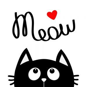 heart meow