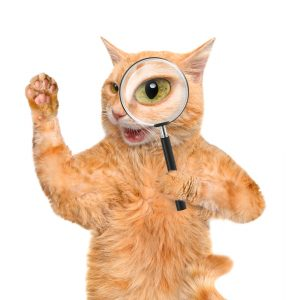 cat with magnify glass