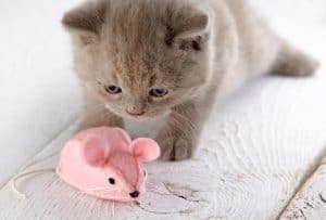kitten and pink mouse