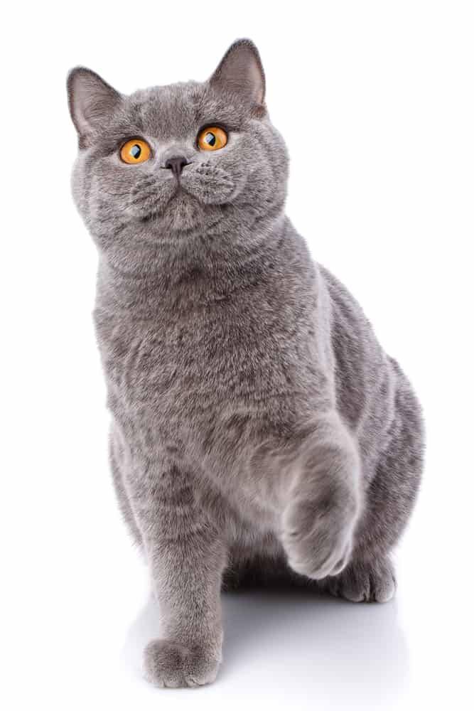 200 Plus German Cat Names: The Conventional and The Quirky 9