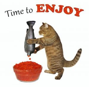 enjoy cat