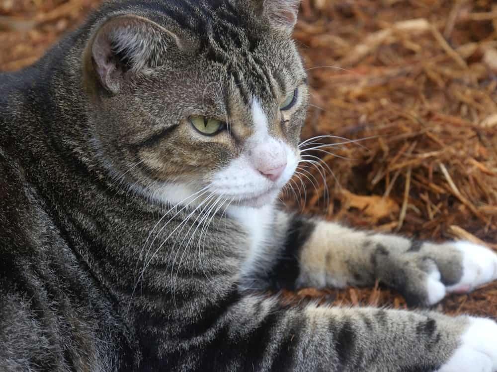 cat 6 toes