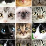 Top 10 Hypoallergenic Cat Breeds: Choosing Your Perfect Feline Companion