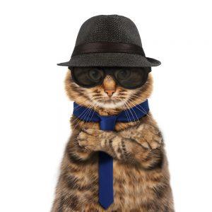 cat kingpin