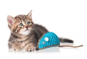 Cute kitten with colored toy mouse