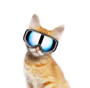 ski google cat
