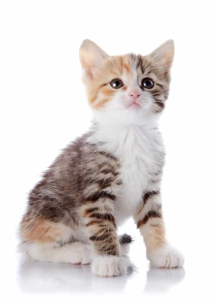 200 Plus German Cat Names: The Conventional and The Quirky 7