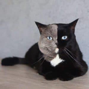 narnia cat