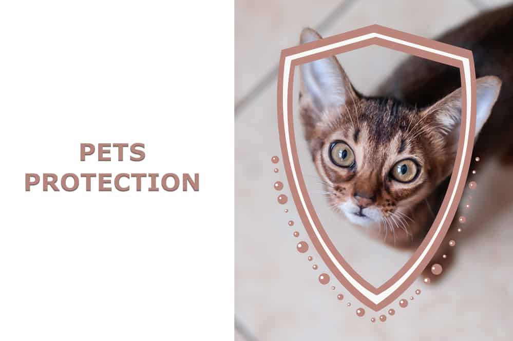 Pets protection