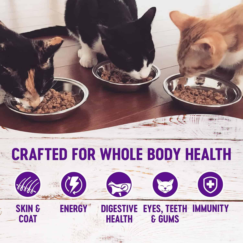 wellness cat food reviews