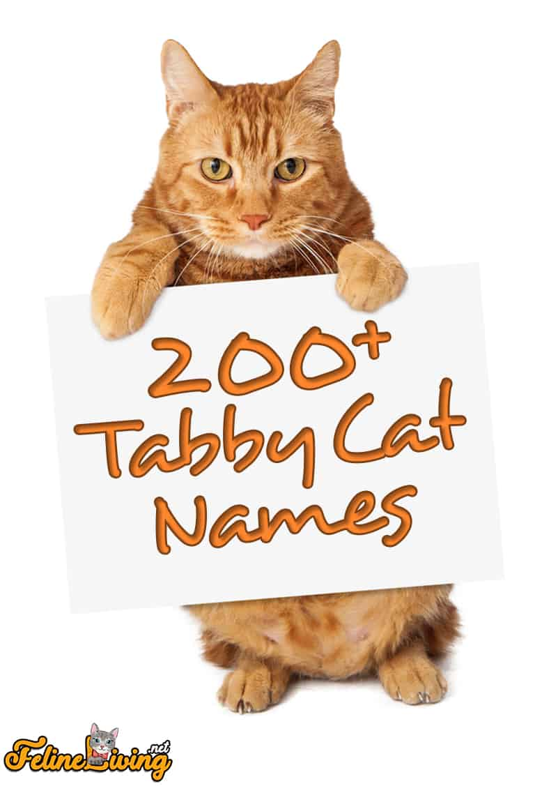 200 Popular Tabby Cat Names The Quirky Beautiful