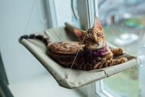 cat window kitty