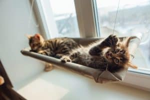 The Best Cat Window Perch of 2020: Exclusive for Felines Who Love Comfort 27