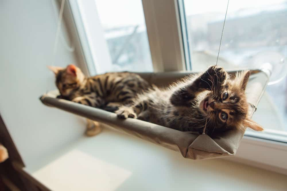 The Best Cat Window Perch of 2021: Exclusive for Felines Who Love Comfort 27