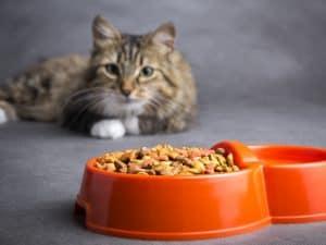 cat looking at a bowl