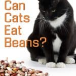 Can Cats Eat Beans: Top Key Points Every Owner Should Know