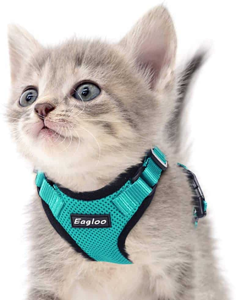 Best Cat Harnesses of 2021: A Comprehensive Guide 3