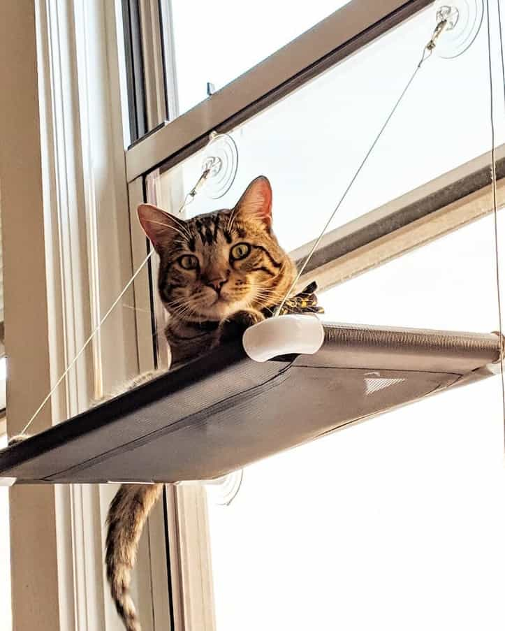 The Best Cat Window Perch of 2020: Exclusive for Felines Who Love Comfort 4