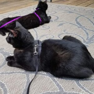 Best Cat Harnesses of 2021: A Comprehensive Guide 23