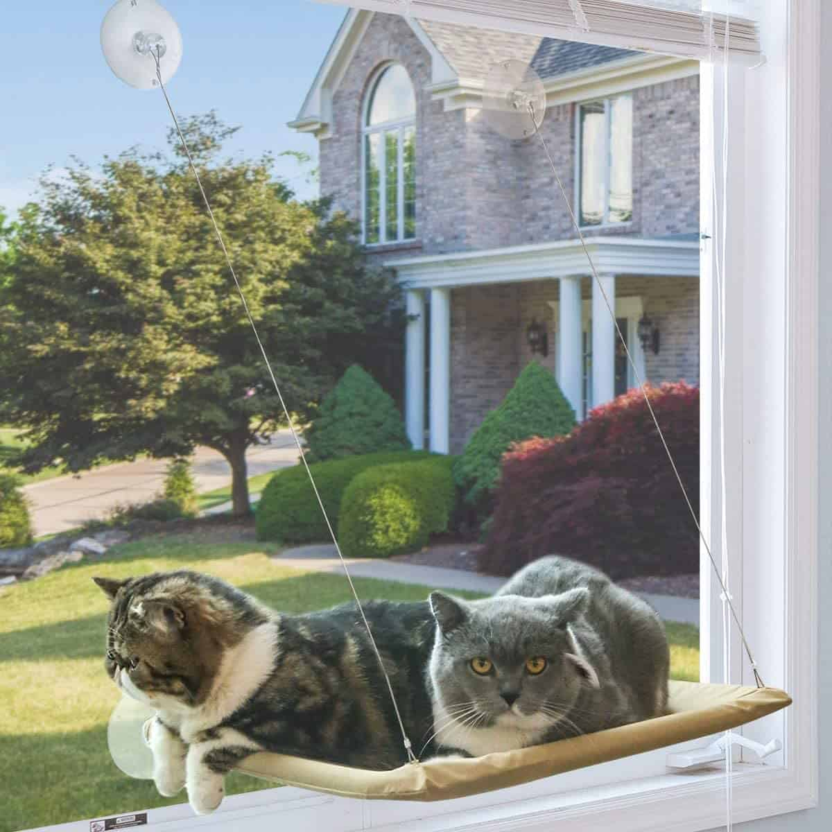 The Best Cat Window Perch of 2020: Exclusive for Felines Who Love Comfort 6