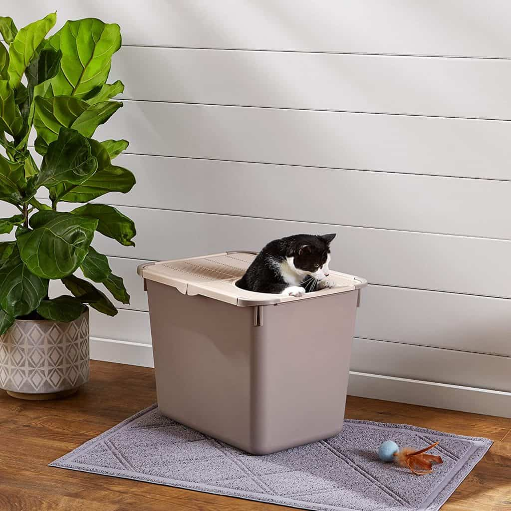 5 Best Top Entry Litter Box for Cats: 2021 Ultimate Guide 17