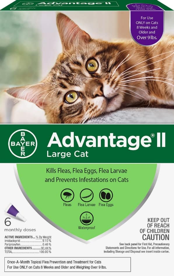 Best Flea Treatment for Cats 2021 - Spot On, Oral Pills, Collar And Spray Reviews 2