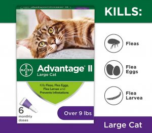 Best Flea Treatment for Cats - Spot On, Oral Pills, Collar And Spray Reviews [2020] 9