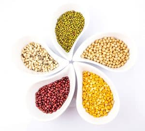 Can Cats Eat Beans: Top Key Points Every Owner Should Know 1