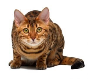 200+ Tabby Cat Names: From the Quirky to the Cute and Famous 12