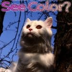 Can Cats See Color? Know How They See The World